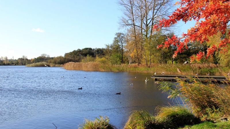 Gothensee – Usedoms größter Binnensee   Ferienwohnung Usedom